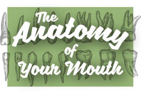 Oral Anatomy 101